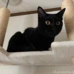 キャットタワーの一番上に乗る猫