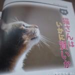 『月刊猫とも新聞』2018年12月号の特集は「猫さんはいかに賢いか」です