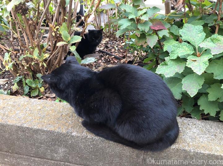 白山神社黒猫さんたち