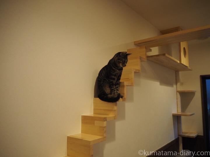キジトラ猫のそらくん