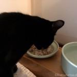 酵素玄米を食べる猫