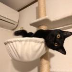 キャットタワーのハンモックからはみ出す子猫