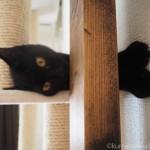 キャットタワーでごろごろする子猫