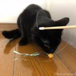 猫の家のおもちゃ「ぷちボンボン」で遊ぶ子猫