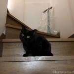 【月命日】世界一の猫