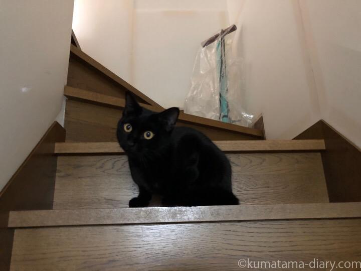 階段のふみお
