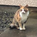 【銚子】新鮮な魚が食べ放題の三毛猫さん