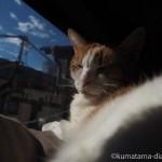 キャットタワーの一番上でひなたぼっこする猫