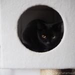 キャットタワーのボックスに入る子猫