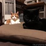石油ファンヒーターの前でくつろぐ猫たち