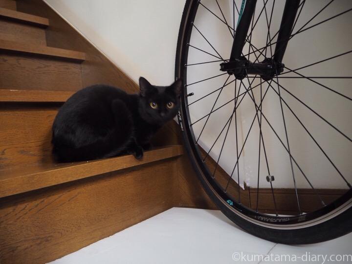 ふみおと自転車