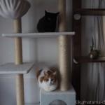 キャットタワーで待機する先住猫と子猫