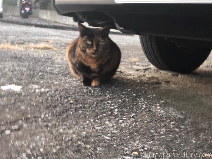 車の下のサビ猫さん