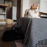 仲が良くない猫にもぴったりの「ぺットの夢こたつ」