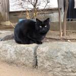 大晦日の「白山神社」の黒猫さん