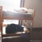 2段ベッドにしたIKEAの「DUKTIG 人形用ベッド」で寝る先住猫と子猫