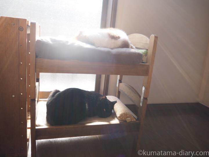 IKEA猫ベッドで寝るたまきとふみお