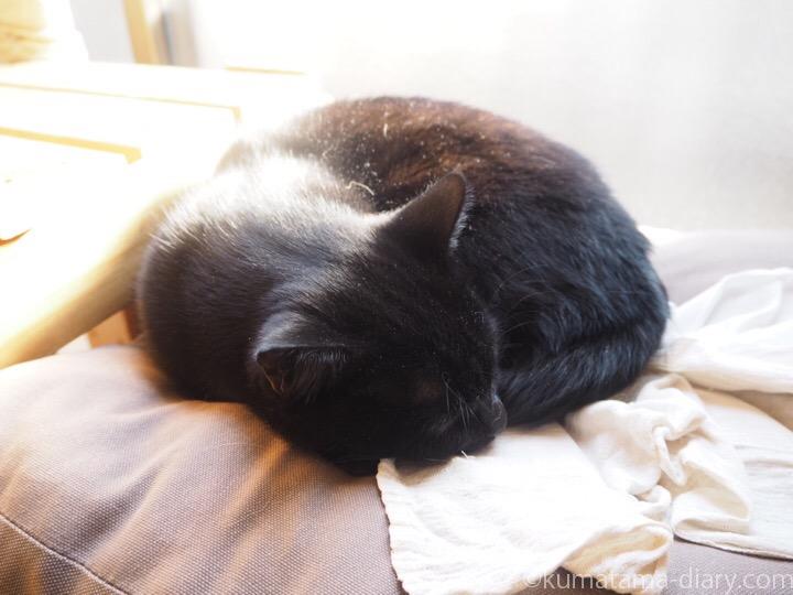IKEA猫ベッドで寝るふみお