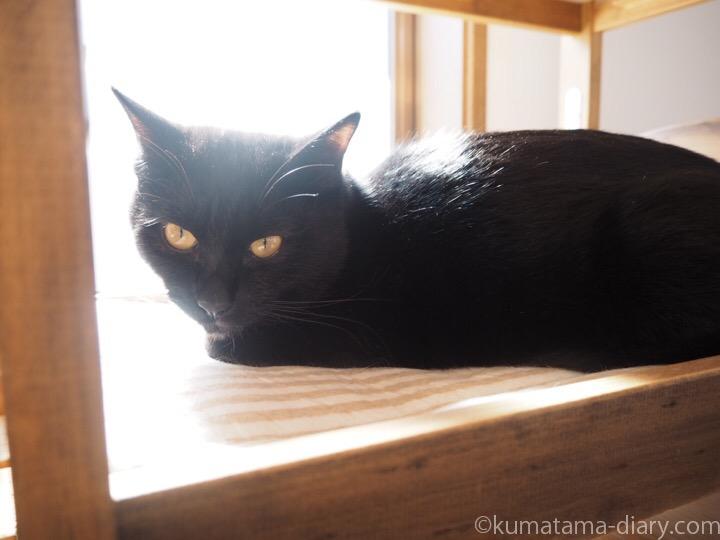 IKEA猫ベッドふみお