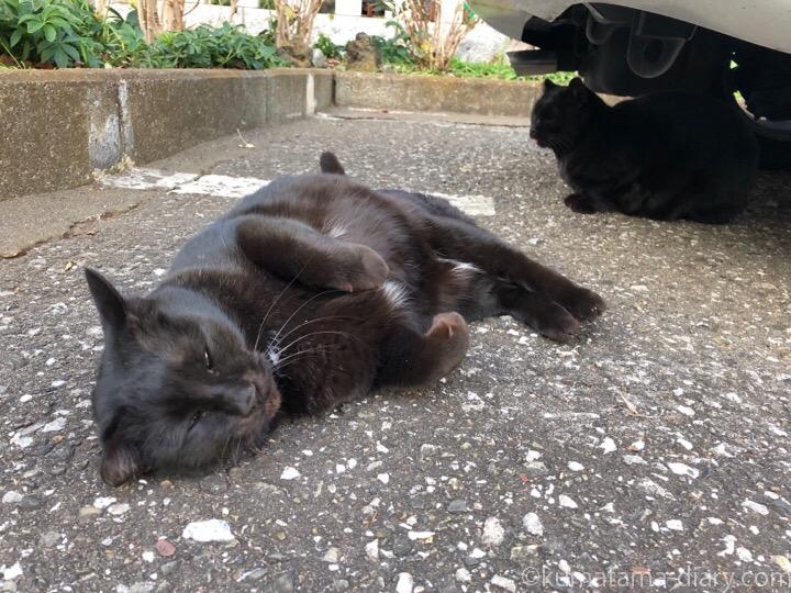 ゴロンとなる黒猫さん