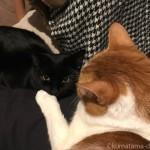石油ファンヒーターの前で近づく子猫と先住猫