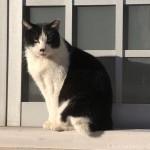 【文京区】ひなたぼっこしていた黒白猫さん