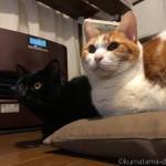 「岩合光昭の世界ネコ歩きmini」を見る猫たち