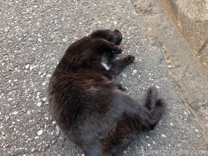 道路に寝転がる黒猫さん