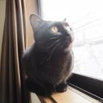 窓の外を見るのが大好きな子猫
