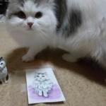 立ち耳のスコティッシュフォールドの木彫り猫のご感想