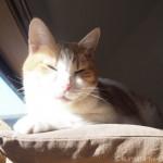 手作りのキャットウォークを上る猫