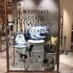 猫写真家・沖昌之さんとZUCCaのコラボ #ZUCCATSのPOP UP STOREを見に行きました