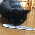 「ねこじゃすり」に噛みつく子猫