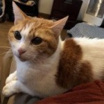 ペットシッターさんの膝に乗る猫とシャイな子猫