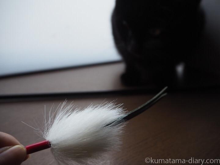 猫じゃらしとふみお