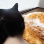先住猫の背中に顔をくっつけて眠る子猫