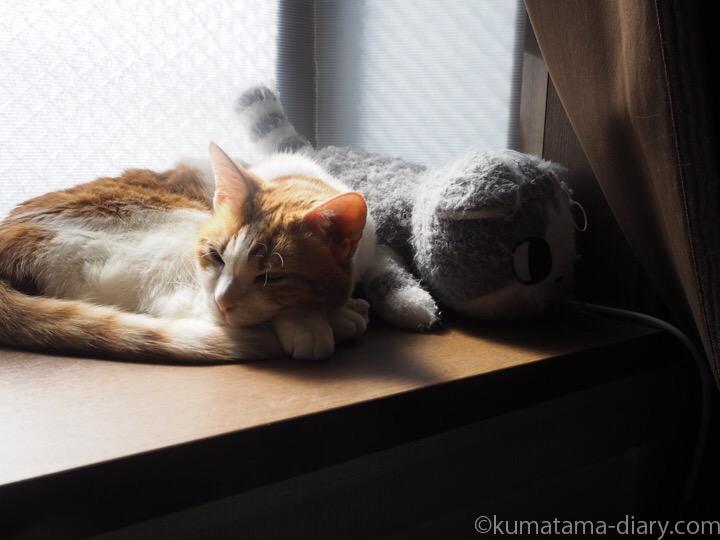 出窓で寝るたまき