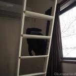 ロフトからはしごを降りる子猫