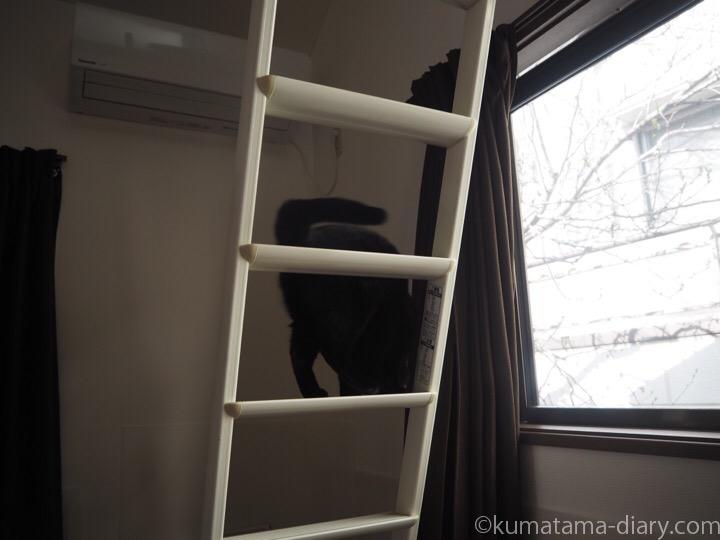 はしごを降りるふみお