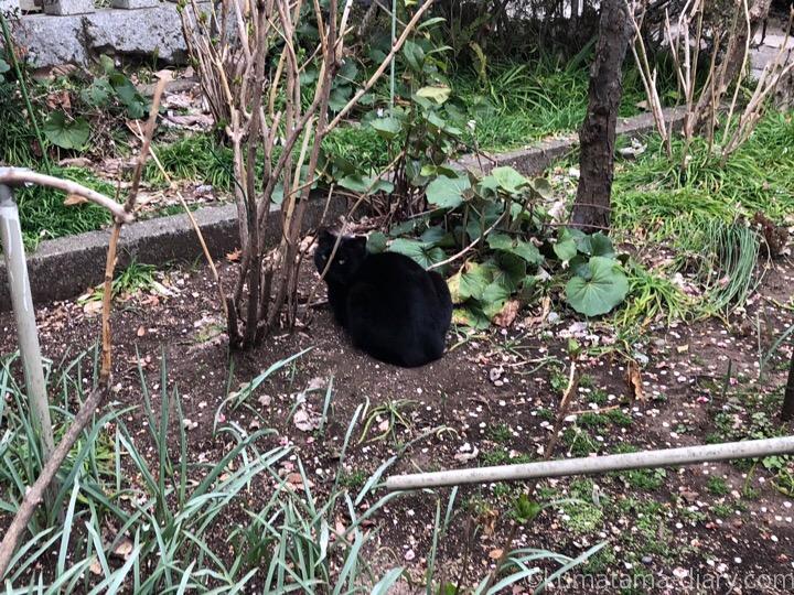 神社黒猫さん