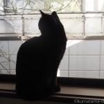 食事の量を調整できる子猫
