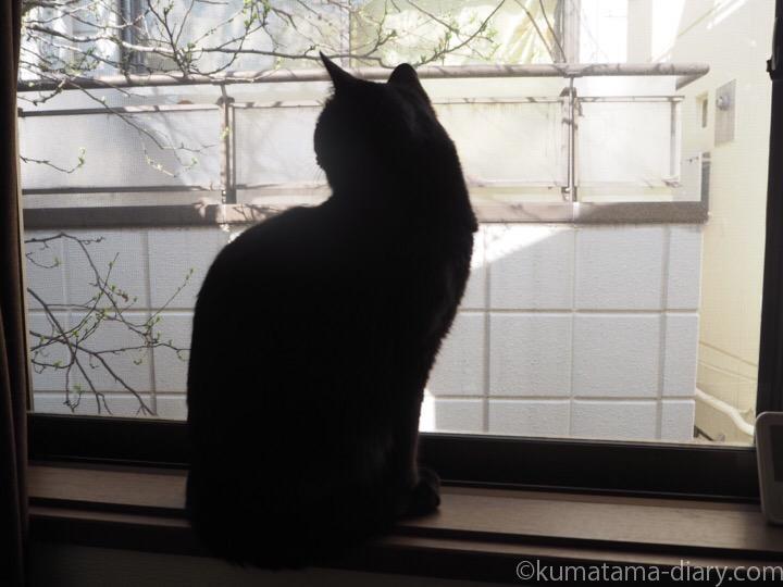 窓台ふみお
