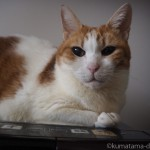 前足を上に向けて座る猫