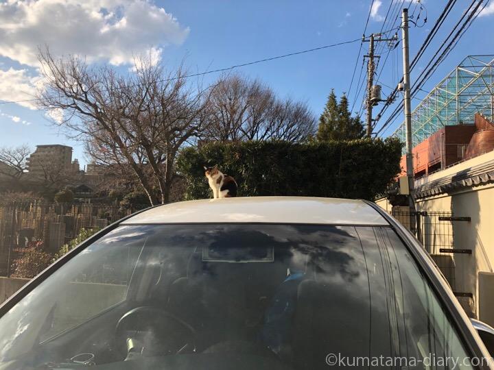 車の上の三毛猫さん