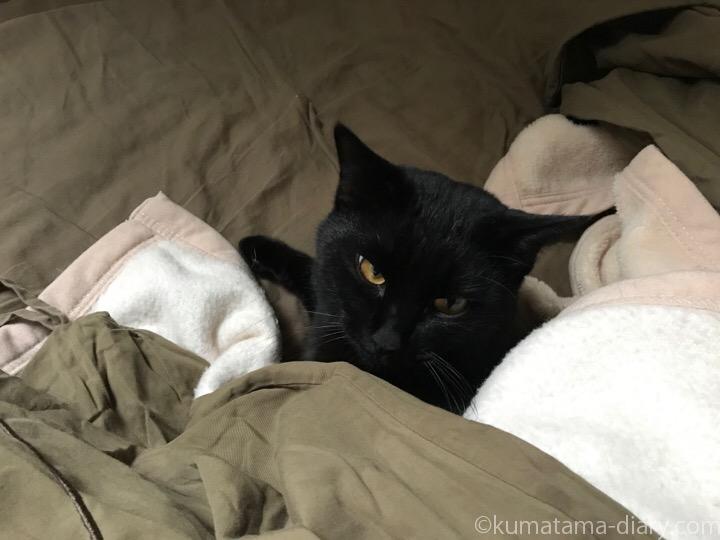 ベッドふみお