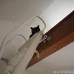 ロフトで掃除が終わるのを待つ子猫