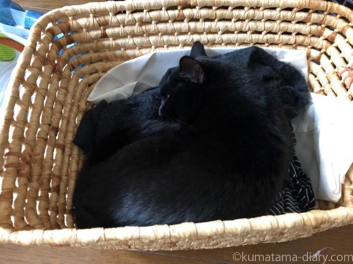 かごの中で寝るふみお