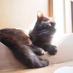 【月命日】同じ黒猫でも性格が違います