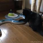 「cat it プレイサーキット」で遊ぶ猫