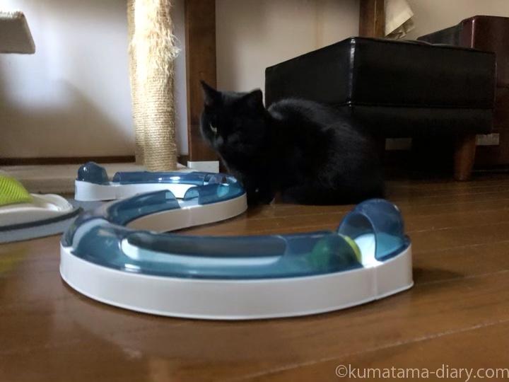 Cat it プレイサーキットふみお